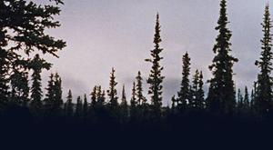trees-300pix