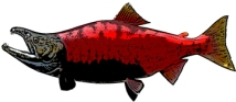 a red fish